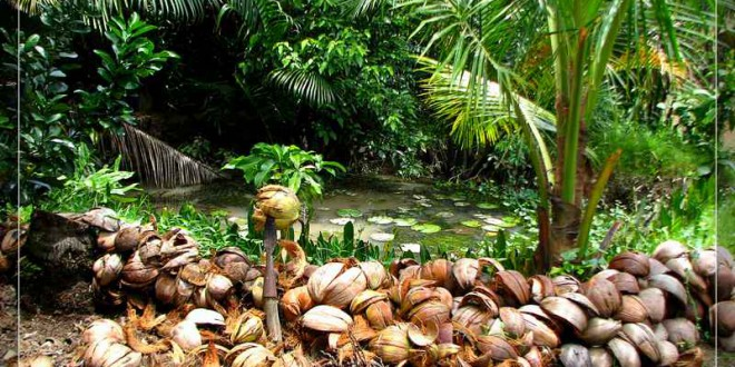 About Ben Tre tourism gardens