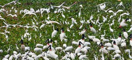 Vam Ho Bird Sanctuary (Ben Tre): The tourist attractions